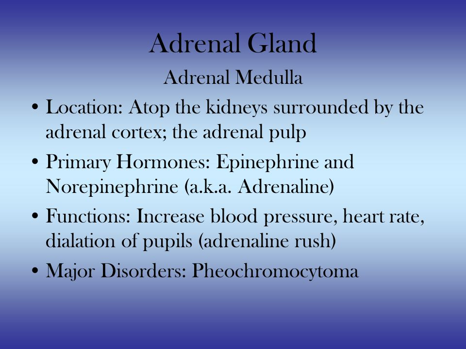Adrenal Gland Adrenal Medulla Location: Atop the kidneys surrounded by the adrenal cortex; the adrenal pulp Primary Hormones: Epinephrine and Norepinephrine (a.k.a.