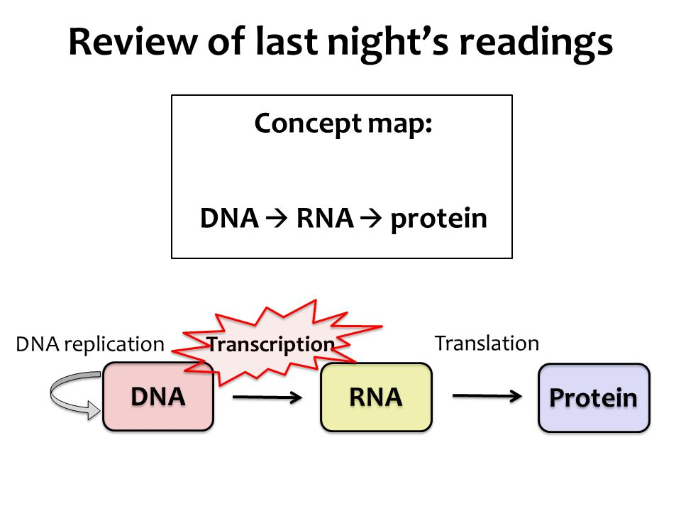 Translation Concept Map.Normal Colon Colon With Cancerous Polyps Ppt Download