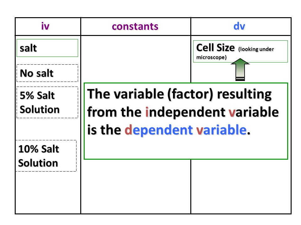 iv dv constants Cell Size (looking under microscope) saltsalt No salt 5% Salt Solution 10% Salt Solution The variable (factor) resulting from the independent variable is the dependent variable.