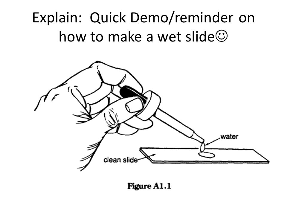 Explain: Quick Demo/reminder on how to make a wet slide
