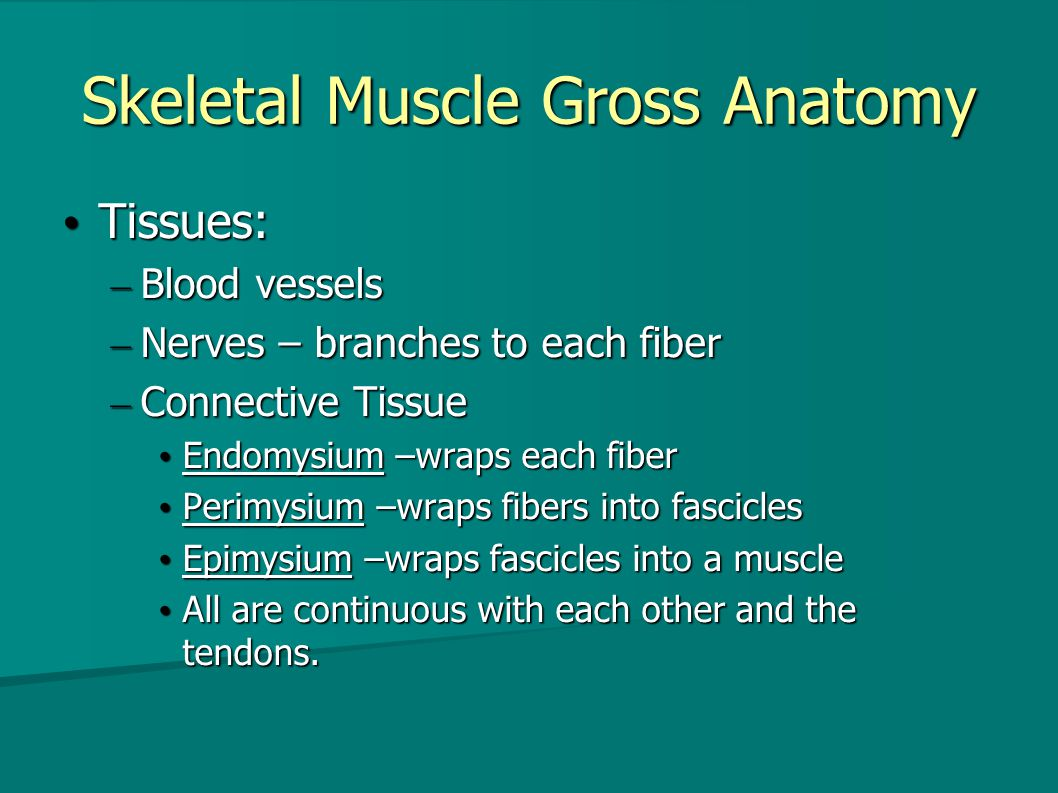 Muscle Tissue. Summary General General Types of muscle tissue Types ...