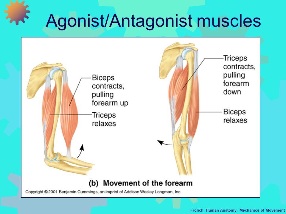 Frolich Human Anatomy Mechanics Of Movement Mechanics Of Movement