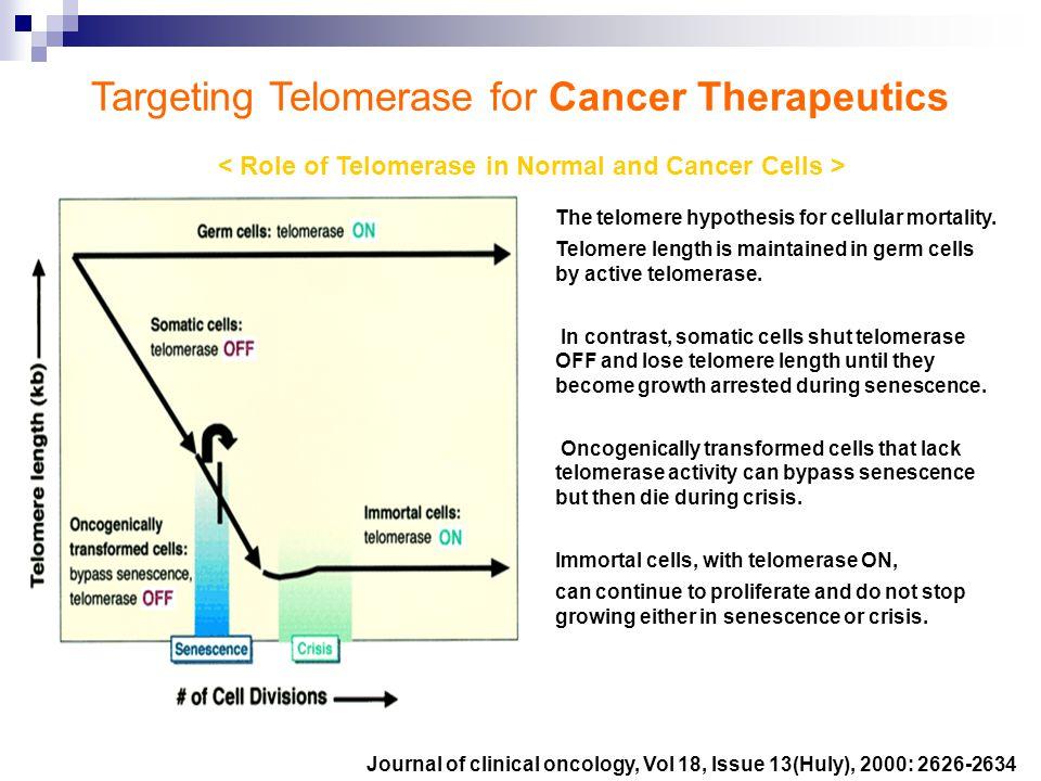 telomere telomerase