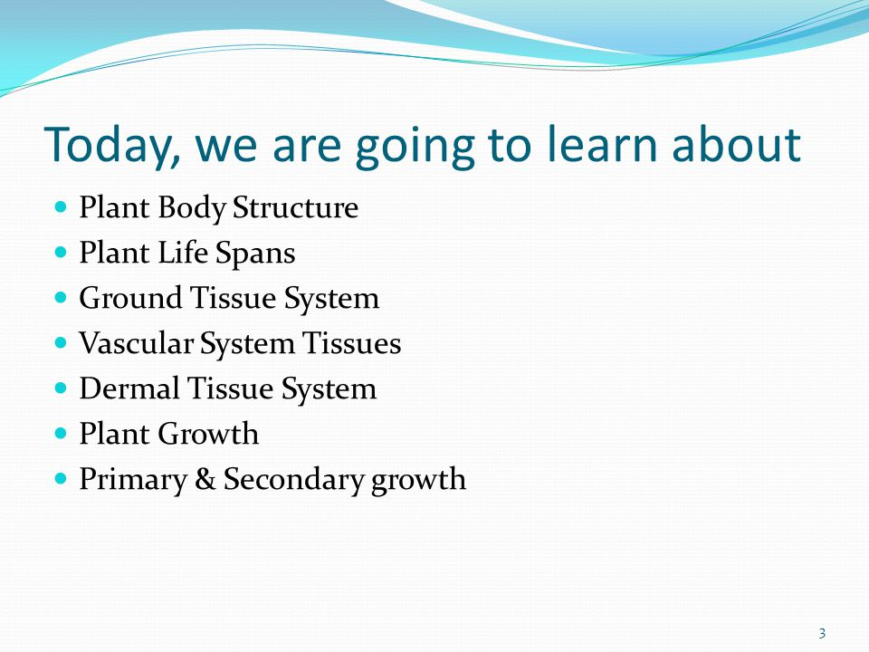 Today, we are going to learn about Plant Body Structure Plant Life Spans Ground Tissue System Vascular System Tissues Dermal Tissue System Plant Growth Primary & Secondary growth 3