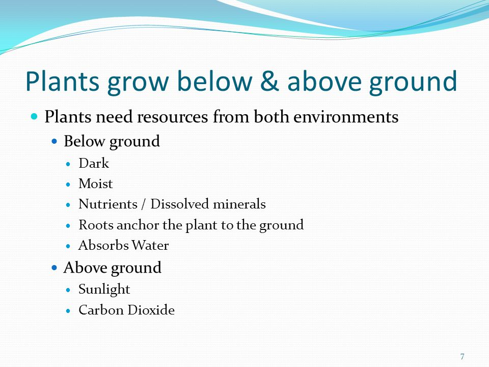Plants grow below & above ground Plants need resources from both environments Below ground Dark Moist Nutrients / Dissolved minerals Roots anchor the plant to the ground Absorbs Water Above ground Sunlight Carbon Dioxide 7