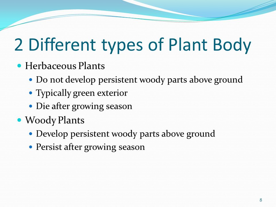 2 Different types of Plant Body Herbaceous Plants Do not develop persistent woody parts above ground Typically green exterior Die after growing season Woody Plants Develop persistent woody parts above ground Persist after growing season 8