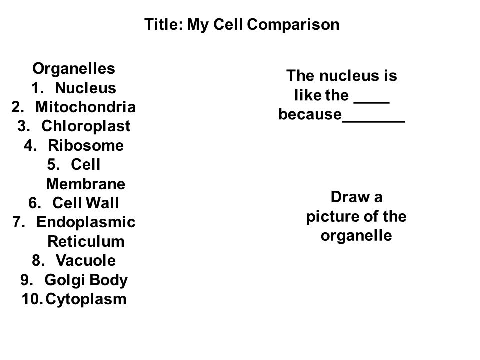 most important organelle
