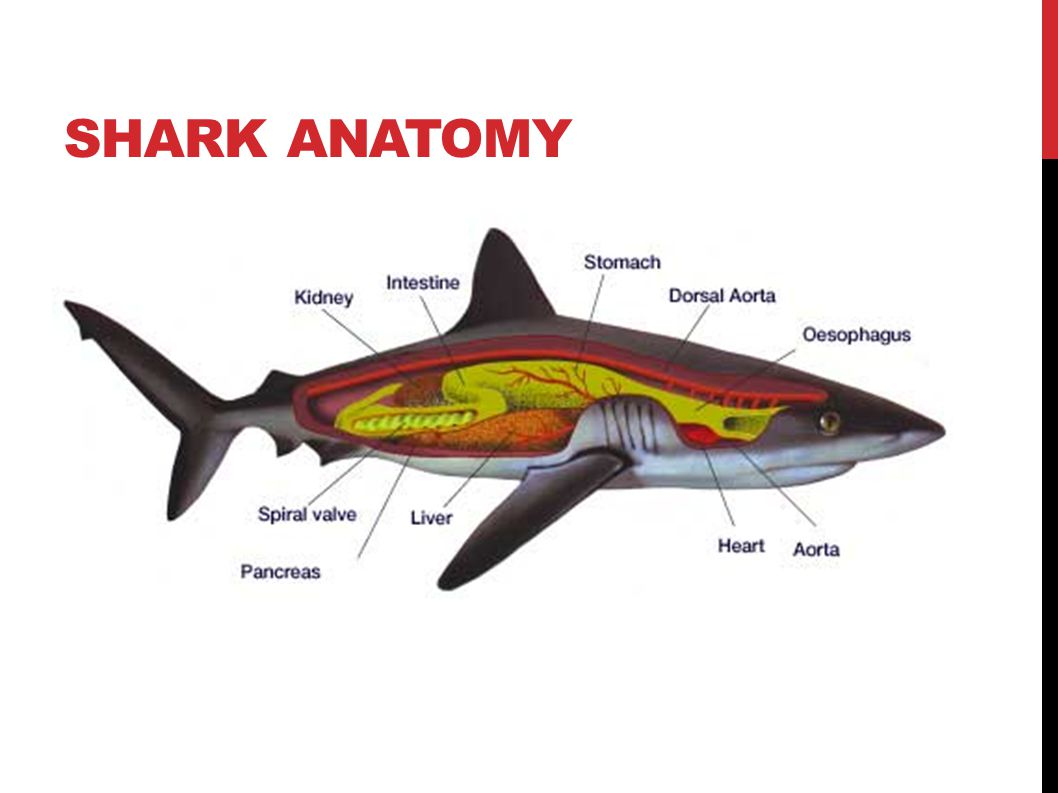 Chapter 16 Notes, Fish. CHARACTERISTICS OF ALL FISH All fish are ...