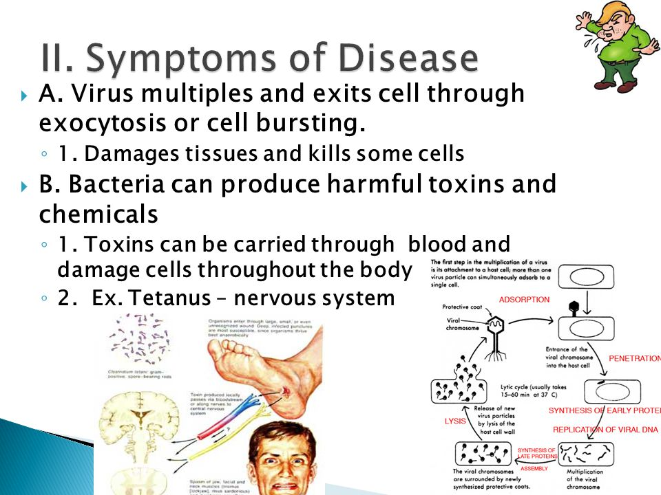  A. Virus multiples and exits cell through exocytosis or cell bursting.