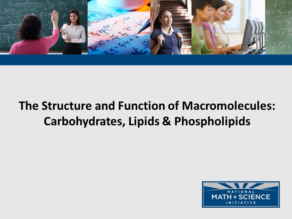 The Structure and Function of Macromolecules: Carbohydrates, Lipids & Phospholipids