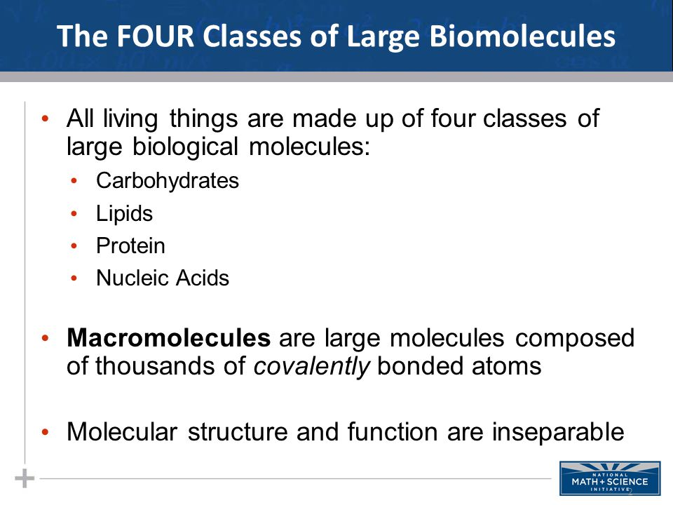 The FOUR Classes of Large Biomolecules All living things are made up of four classes of large biological molecules: Carbohydrates Lipids Protein Nucleic Acids Macromolecules are large molecules composed of thousands of covalently bonded atoms Molecular structure and function are inseparable 2