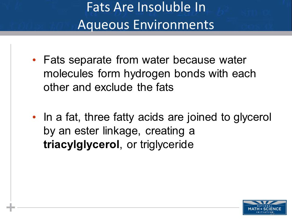 Fats Are Insoluble In Aqueous Environments Fats separate from water because water molecules form hydrogen bonds with each other and exclude the fats In a fat, three fatty acids are joined to glycerol by an ester linkage, creating a triacylglycerol, or triglyceride 25