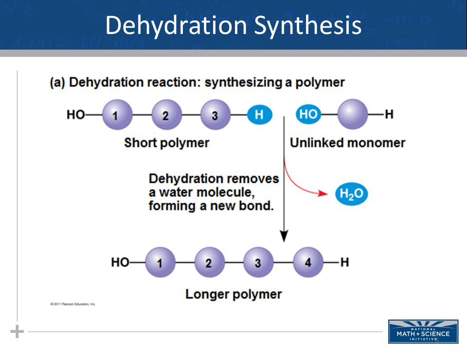 Dehydration Synthesis 5
