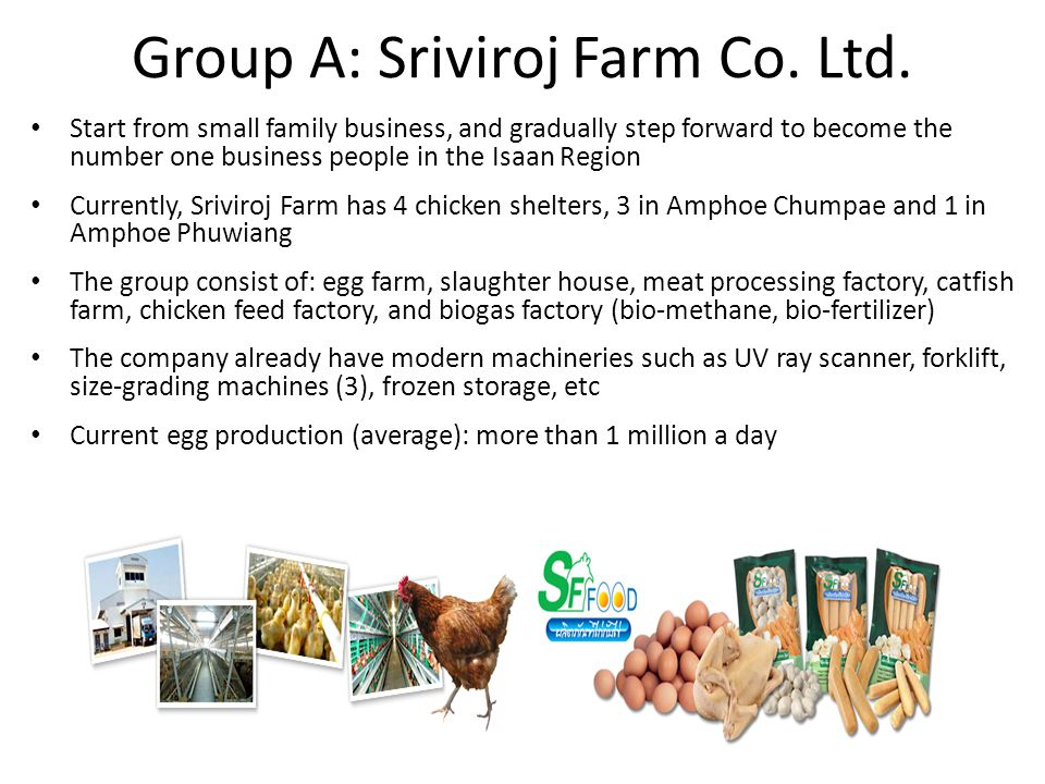 Field Visit Divided into 3 main groups – Group A : Food – Group B