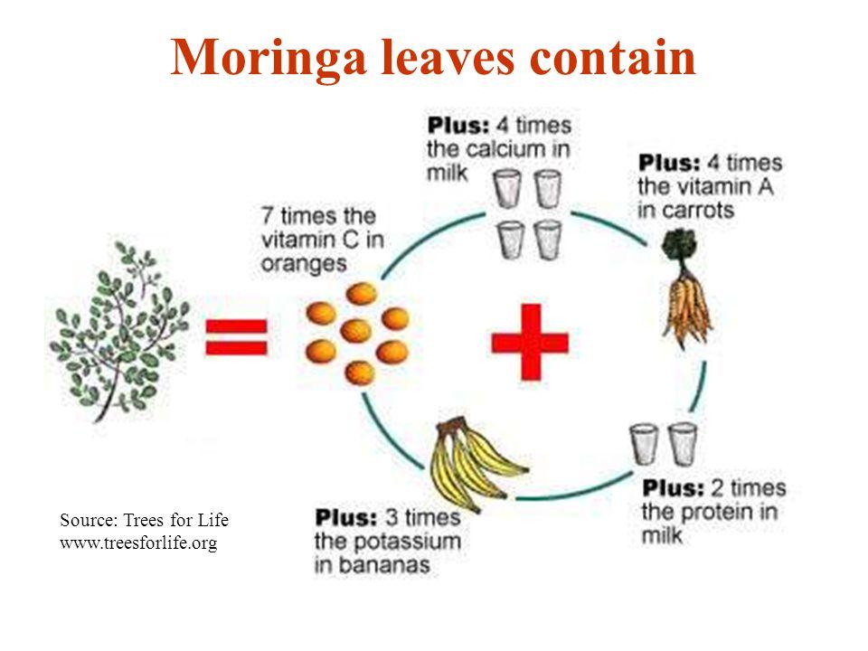 Moringa oleifera der wunderbaum moringa oleifera the miracle tree 4 moringa leaves contain source trees ccuart Image collections