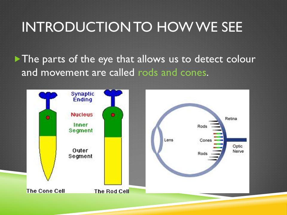 INTRODUCTION TO HOW WE SEE  The parts of the eye that allows us to detect colour and movement are called rods and cones.