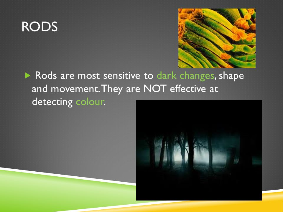 RODS  Rods are most sensitive to dark changes, shape and movement.