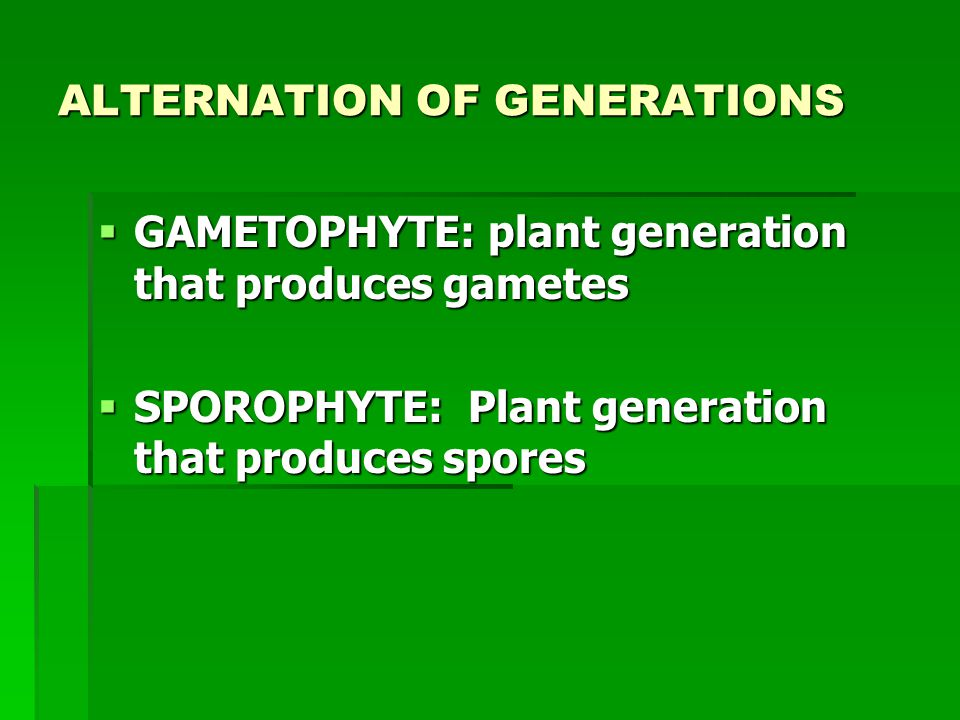ALTERNATION OF GENERATIONS  GAMETOPHYTE: plant generation that produces gametes  SPOROPHYTE: Plant generation that produces spores