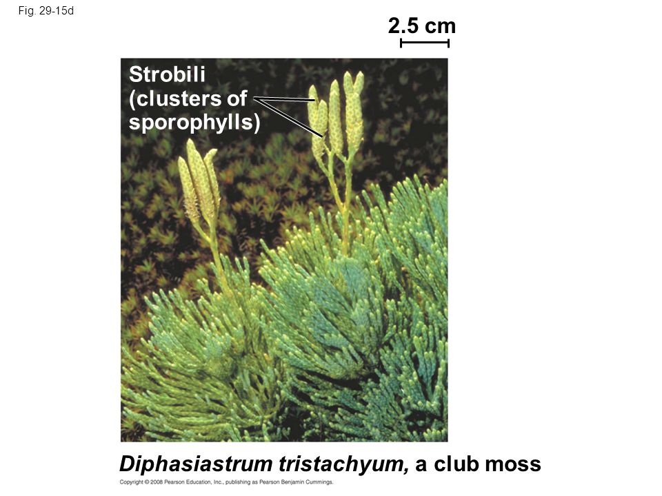 Club Moss Labeled Diagram Complete Wiring Diagrams