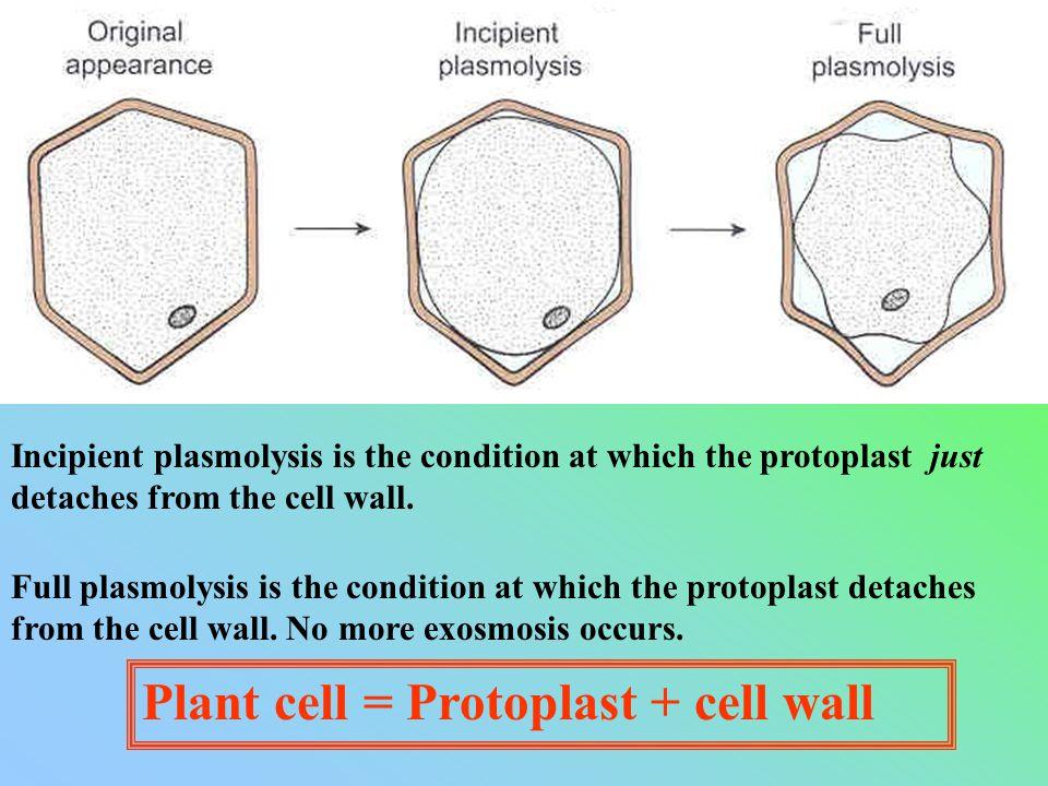 incipient plasmolysis definition