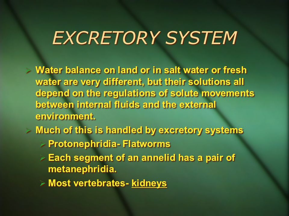 EXCRETORY SYSTEM  Water balance on land or in salt water or fresh water are very different, but their solutions all depend on the regulations of solute movements between internal fluids and the external environment.