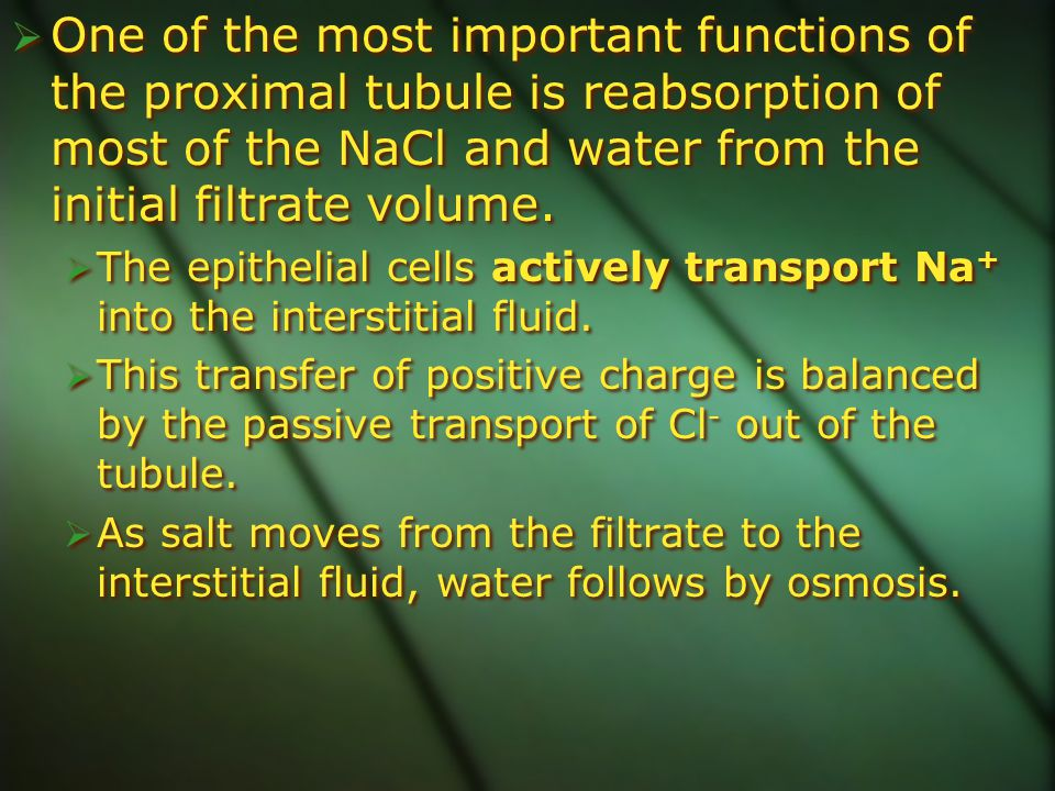 One of the most important functions of the proximal tubule is reabsorption of most of the NaCl and water from the initial filtrate volume.