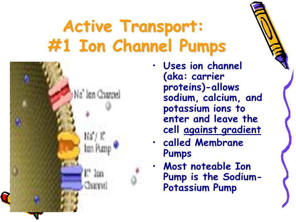 ACTIVE TRANSPORT * REQUIRES ENERGY* Energy used is from ATP MOVEMENT OF SUBSTANCES FROM LOW CONCENTRATION.