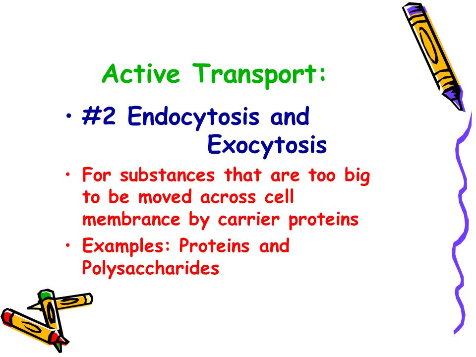 Active Transport: #1 Ion Channel Pumps Uses ion channel (aka: carrier proteins)-allows sodium, calcium, and potassium ions to enter and leave the cell against gradient called Membrane Pumps Most noteable Ion Pump is the Sodium- Potassium Pump
