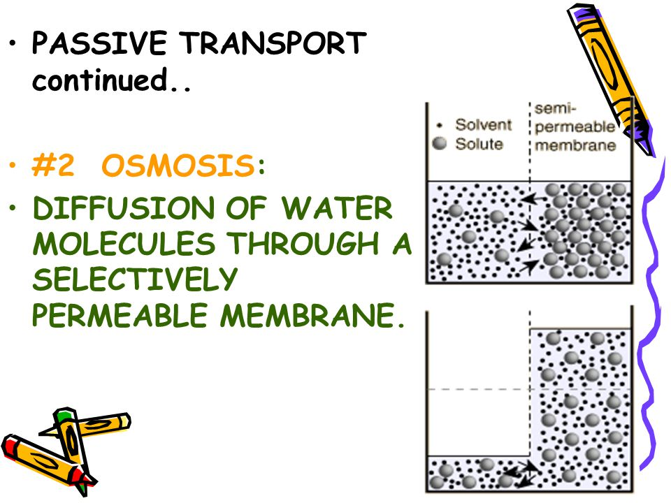 Diffusion occurs with CONTINUOUS MOVEMENT until EQUILIBRIUM is reached EQUILIBRIUM: equal amounts of substance are on both sides of the cell membrane