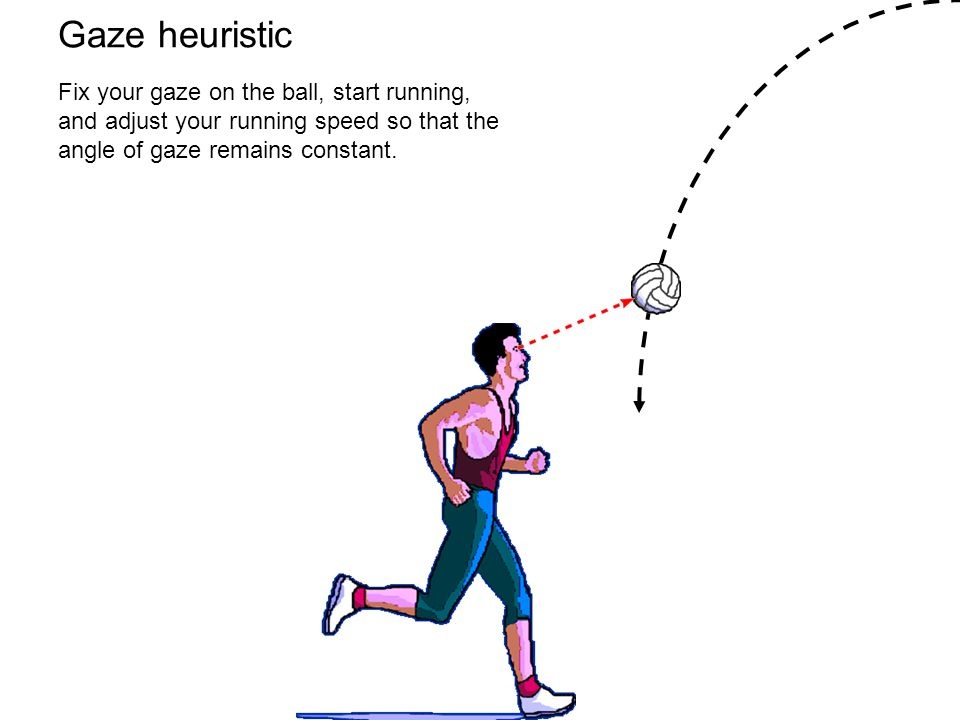 Gaze heuristic Fix your gaze on the ball, start running, and adjust your running speed so that the angle of gaze remains constant.