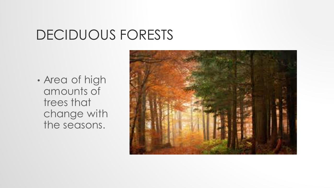 DECIDUOUS FORESTS Area of high amounts of trees that change with the seasons.