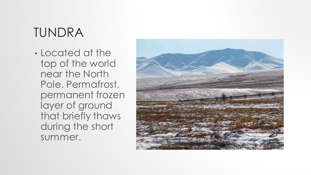 TUNDRA Located at the top of the world near the North Pole.