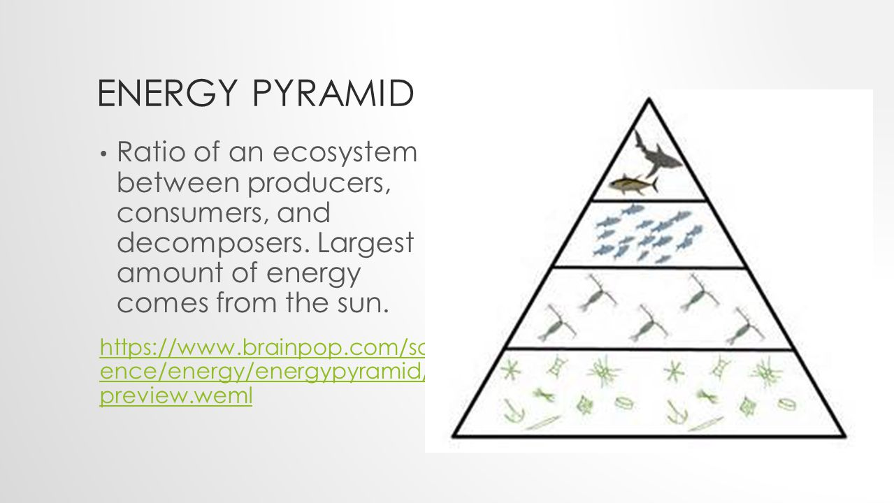 ENERGY PYRAMID Ratio of an ecosystem between producers, consumers, and decomposers.