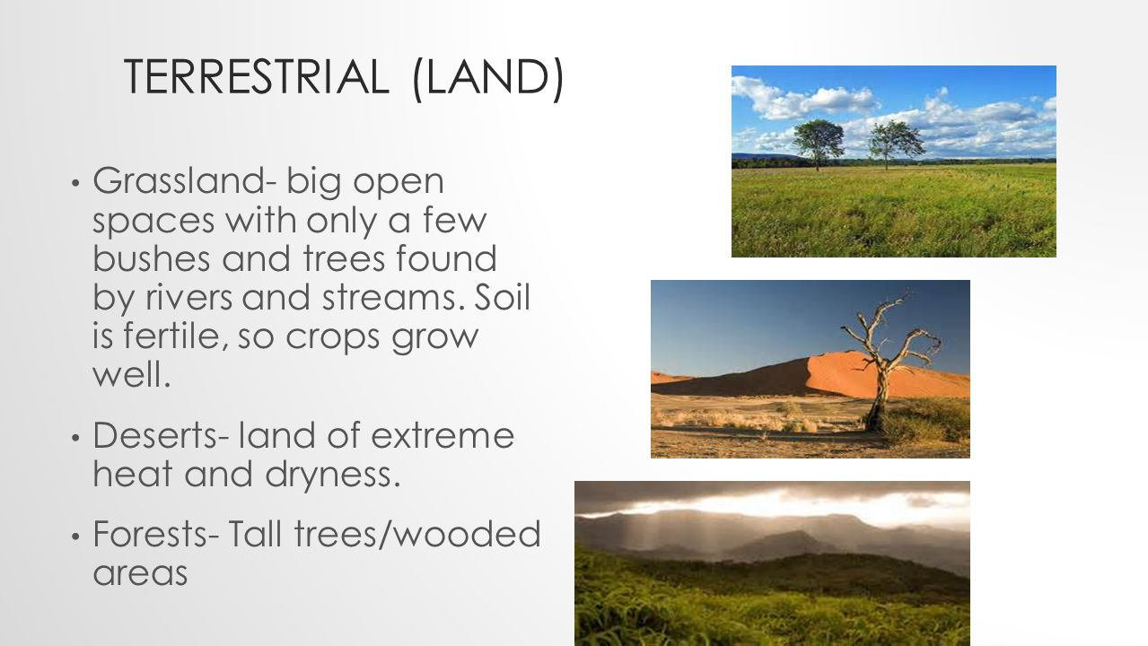 TERRESTRIAL (LAND) Grassland- big open spaces with only a few bushes and trees found by rivers and streams.