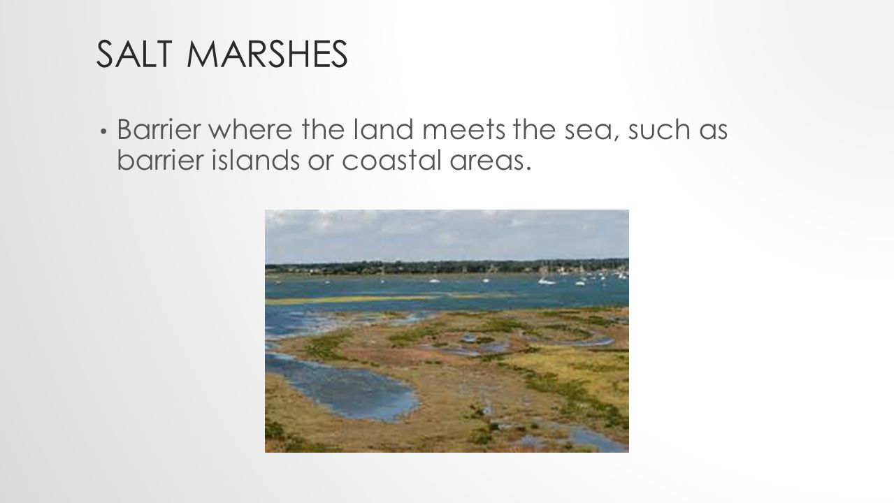 SALT MARSHES Barrier where the land meets the sea, such as barrier islands or coastal areas.