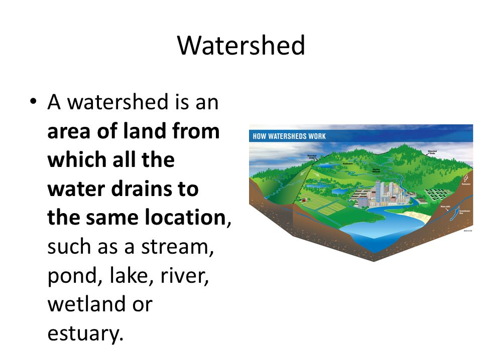 Watershed A watershed is an area of land from which all the water drains to the same location, such as a stream, pond, lake, river, wetland or estuary.