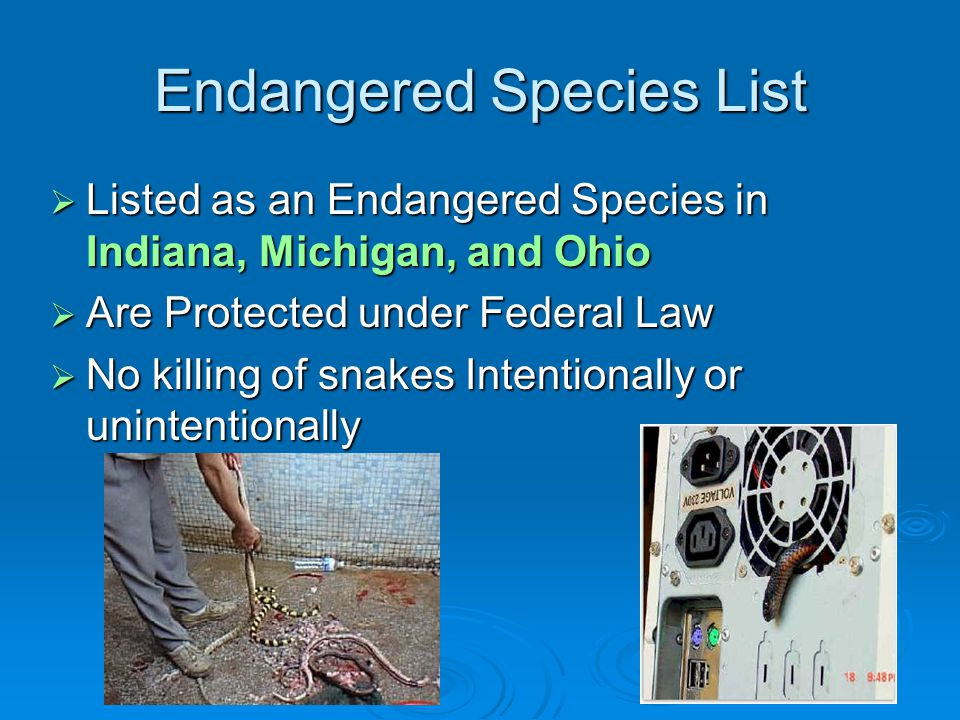 Copperbelly Water Snakes And Its Habitat By Matt Tekulve Ppt