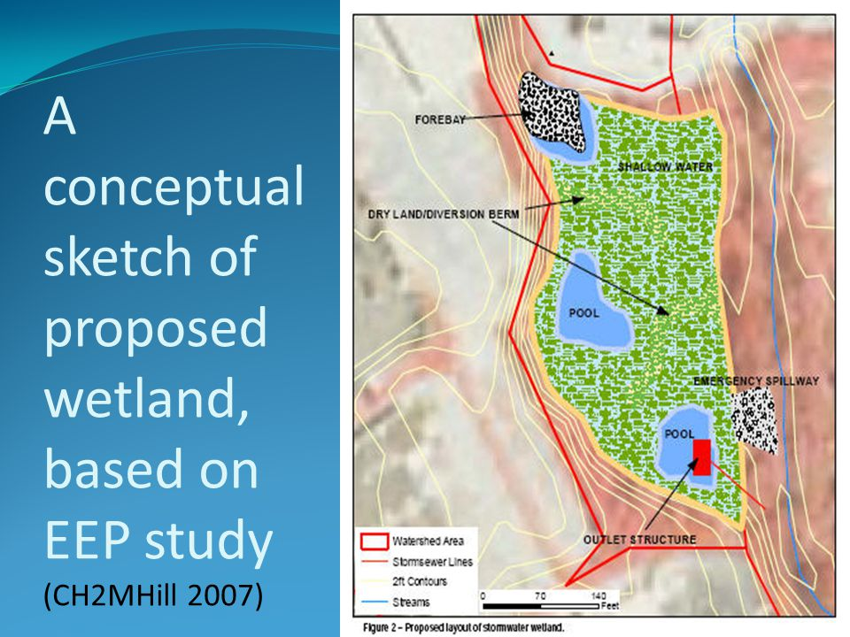 A conceptual sketch of proposed wetland, based on EEP study (CH2MHill 2007)