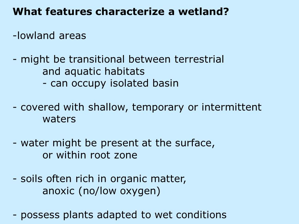 What features characterize a wetland.