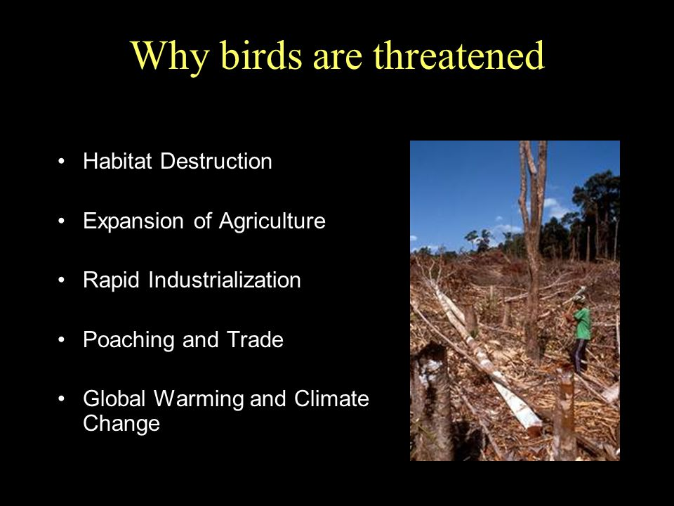 Why birds are threatened Habitat Destruction Expansion of Agriculture Rapid Industrialization Poaching and Trade Global Warming and Climate Change