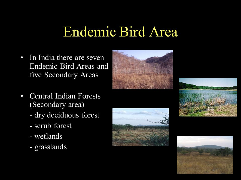 Endemic Bird Area In India there are seven Endemic Bird Areas and five Secondary Areas Central Indian Forests (Secondary area) - dry deciduous forest - scrub forest - wetlands - grasslands