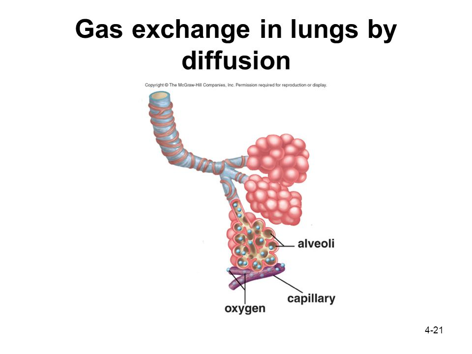4-21 Gas exchange in lungs by diffusion