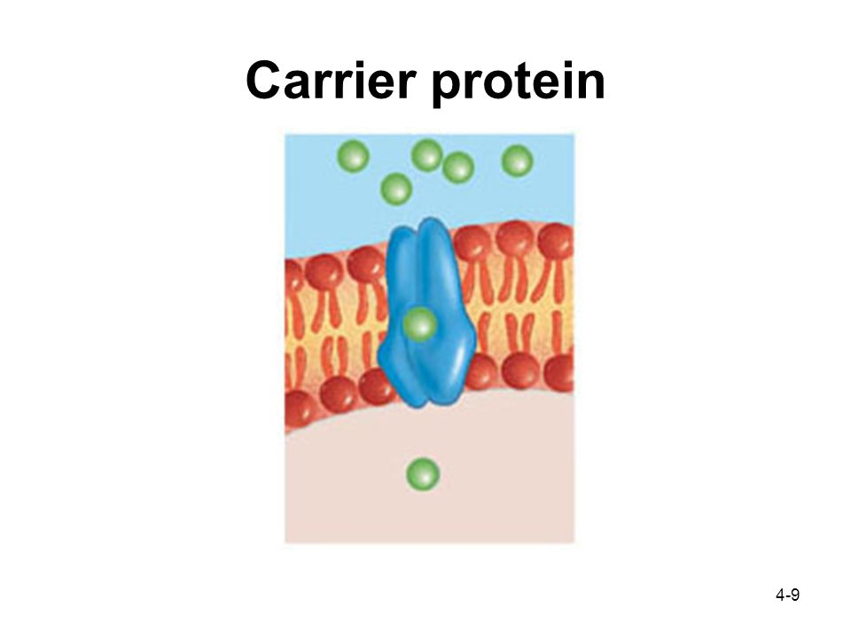 4-9 Carrier protein