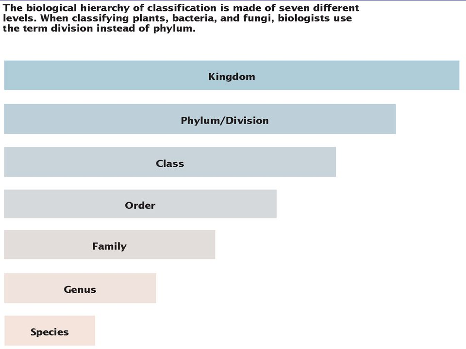 Classes with similar characteristics are assigned to a phylum Similar phyla are collected into a kingdom Similar kingdoms are grouped into domains