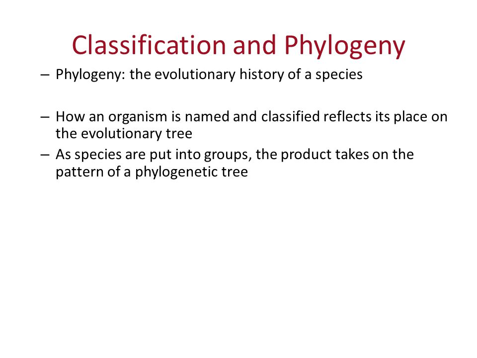 Classification and Phylogeny – Phylogeny: the evolutionary history of a species – How an organism is named and classified reflects its place on the evolutionary tree – As species are put into groups, the product takes on the pattern of a phylogenetic tree
