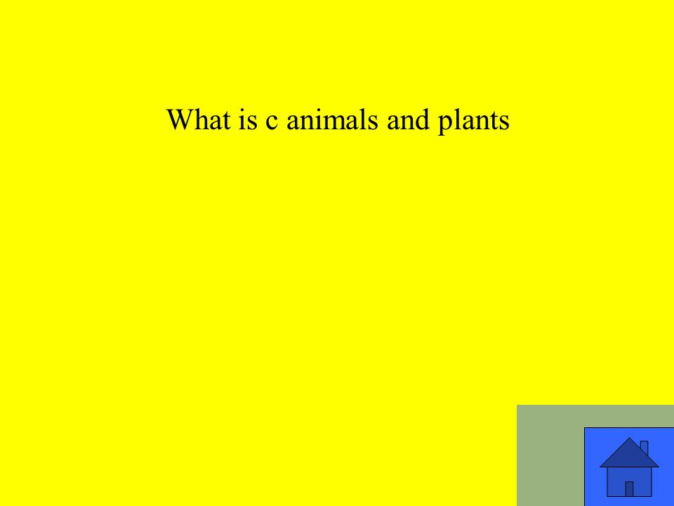 What is c animals and plants