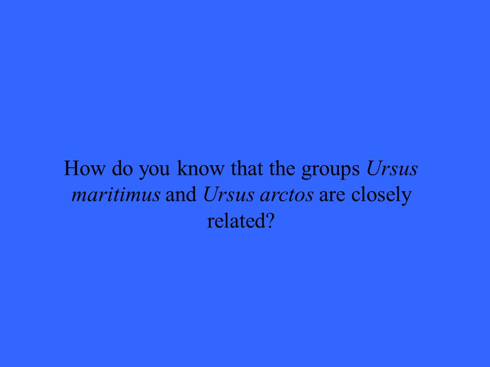 How do you know that the groups Ursus maritimus and Ursus arctos are closely related