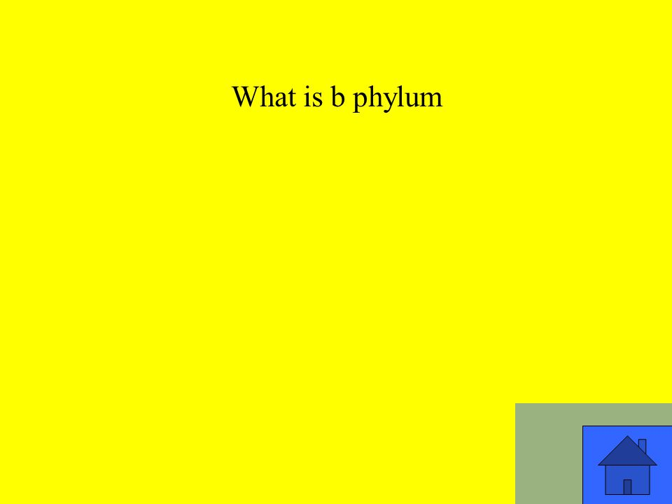 What is b phylum