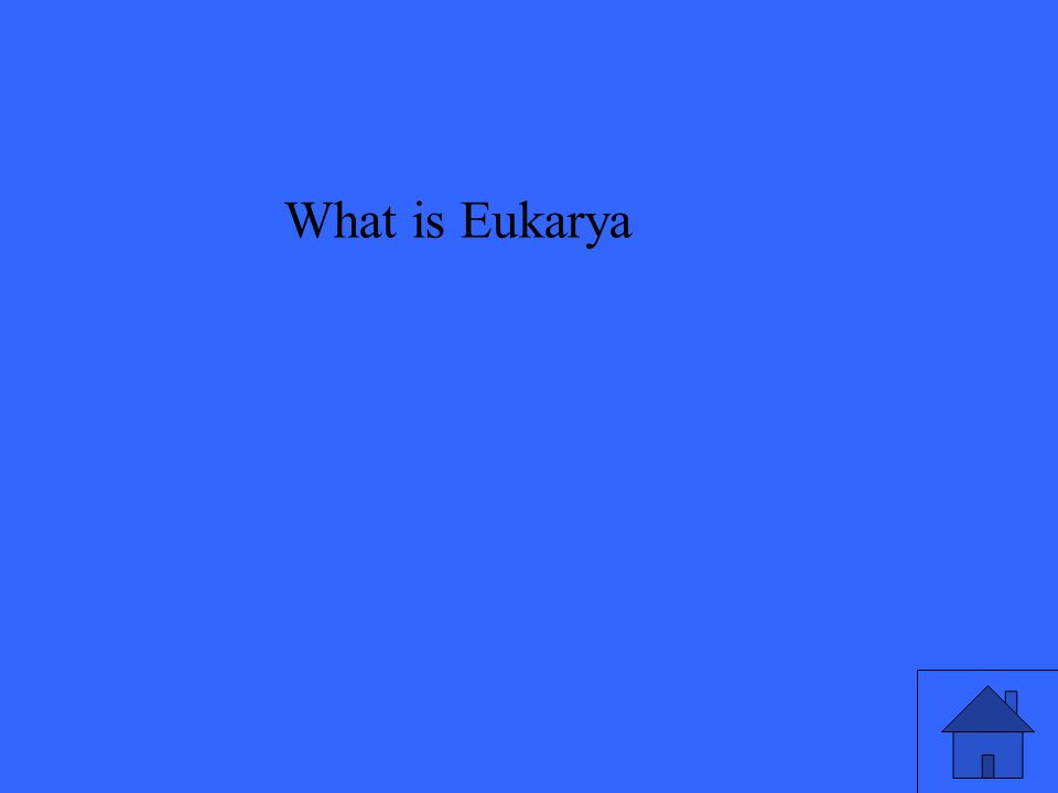 What is Eukarya