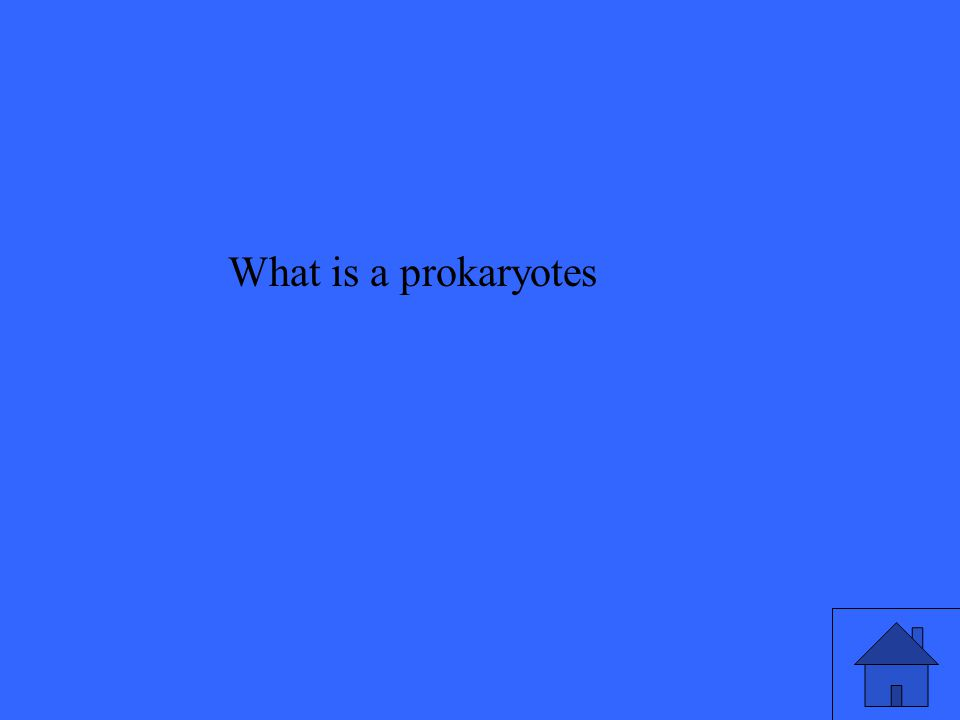 What is a prokaryotes